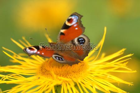 butterfly on flower 9