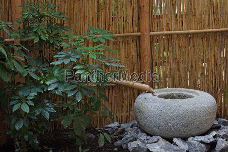 verde asiatico bambu simples meditacao japones