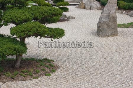 verde asia pinho rocha cascalho asiatico