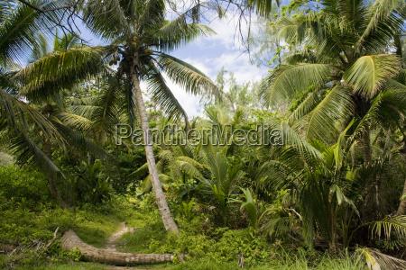 verde selva palma seychelles trilha caminho